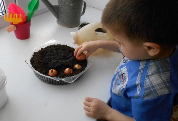 Мальчик высаживает лук в подготовленные лунки в миске с почвой