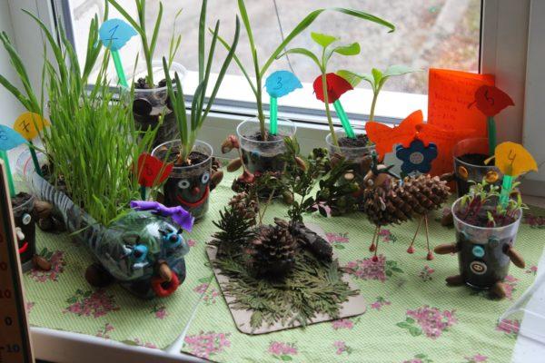 как оформить уголок природы в детском саду