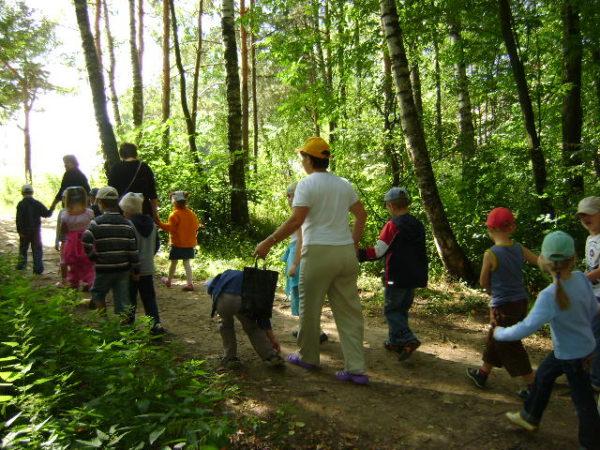 Дети и педагоги идут по широкой тропинке в роще