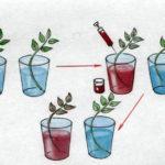 Растение и вода
