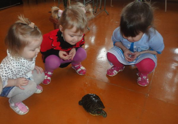 Три девочки сидят на корточках и наблюдают за черепахой