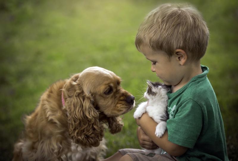 В современном мире всё острее встаёт проблема развития нравственных качеств у детей