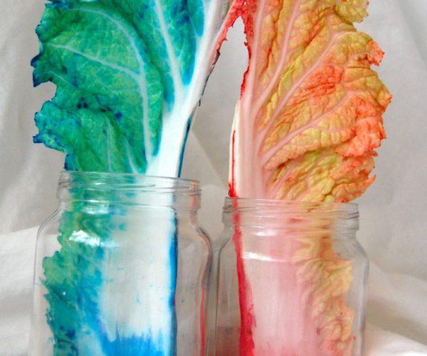 Эксперимент «Разноцветные листья»
