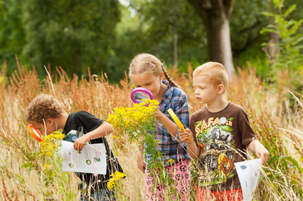 Дети рассматривают растения через лупу