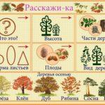 Мнемокарточка «Деревья»