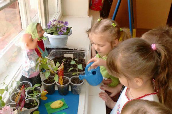 Дети поливают комнатные растения