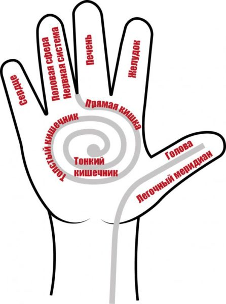 Акупунктурная карта кисти руки