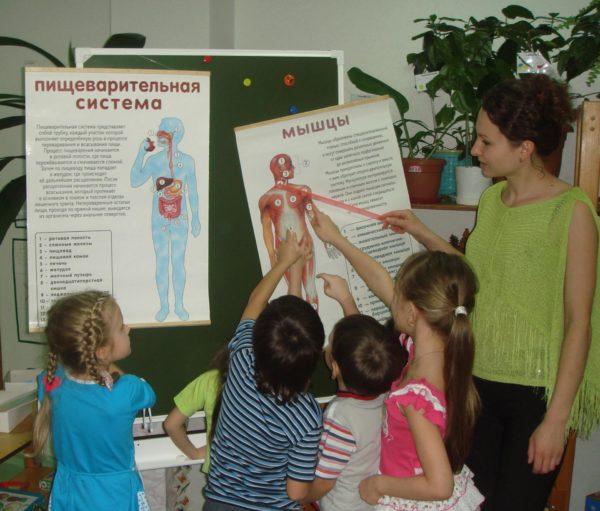 Дети изучают строение тела человека