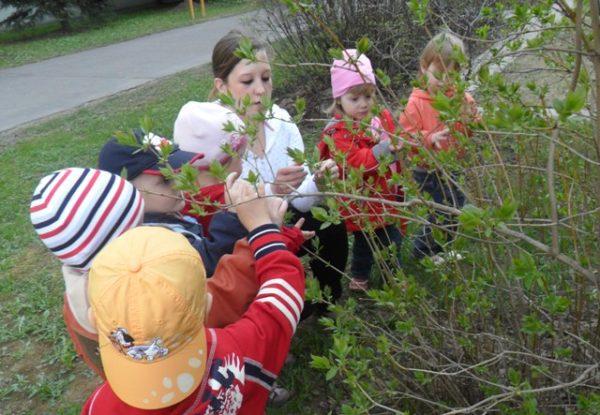 Дети рассматривают деревце на прогулке