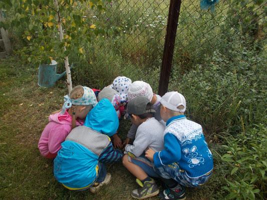 Дети рассматривают жучков