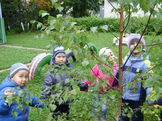 Дети рассматривают дерево на территории ДОУ