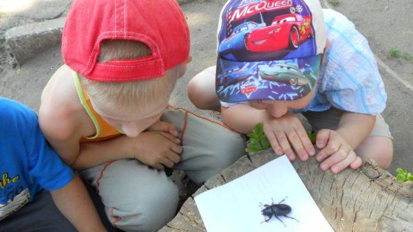Мальчики рассматривают жука на листе бумаги