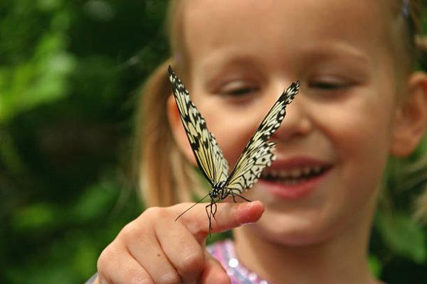 Бабочка на руке у девочки