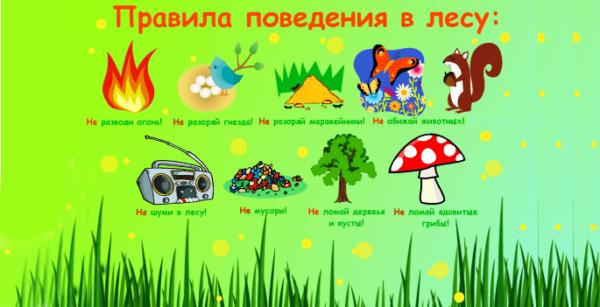 Плакат с правилами поведения в лесу