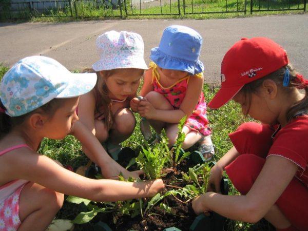 Четверо детей рассматривают растения на участке ДОУ
