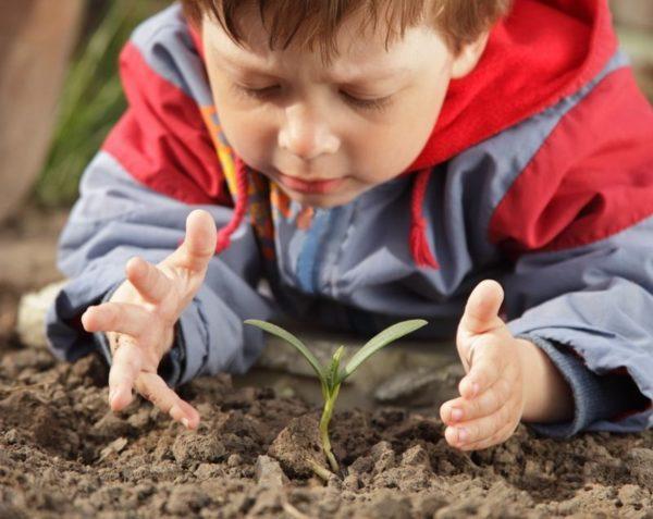 Мальчик рассматривает росток