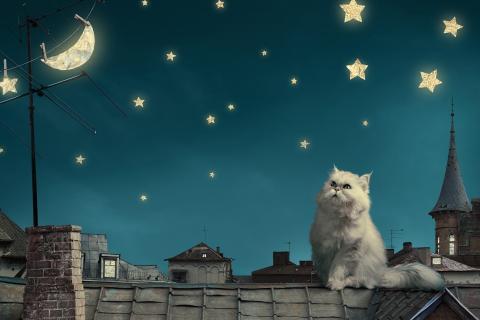 Белый кот ночью на крыше