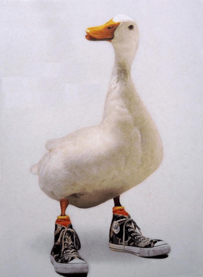 Винкс, прикольный картинки гусей