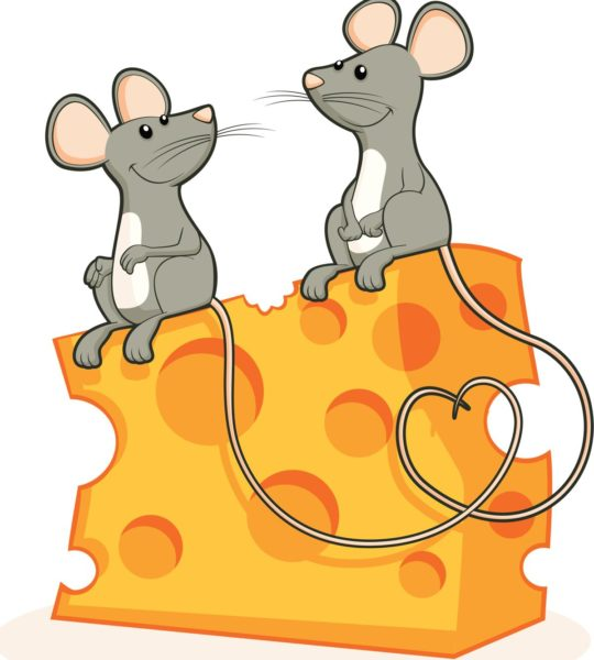 Две мыши сидят на куске сыра