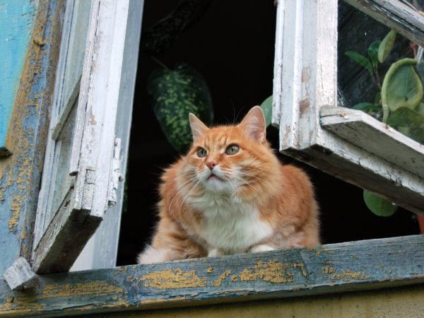 Рыжий кот сидит на подоконнике