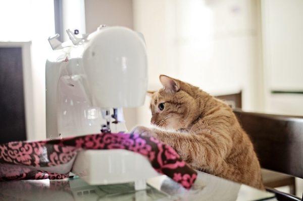 Кошка сидит за швейной машинкой