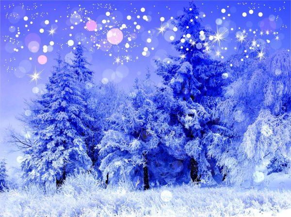 Заснеженный зимний лес