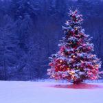 Нарядная ёлка в зимнем лесу