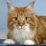 Фотография: кот