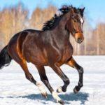 Фотография: лошадь