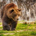 Фотография: медведь