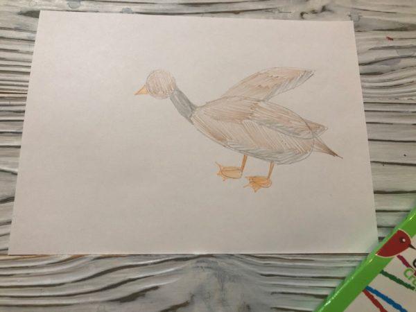 Рисунка Серая Шейка: закрашивание