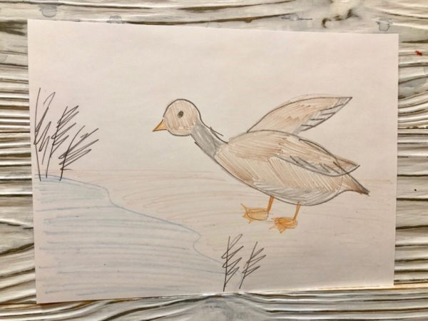 Рисунок «Серая Шейка»