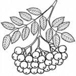 Схема грозди рябины