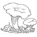 Шаблон гриба лисички