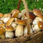 Фотография: грибы в лукошке