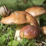 Фотография: улитка на шляпке гриба