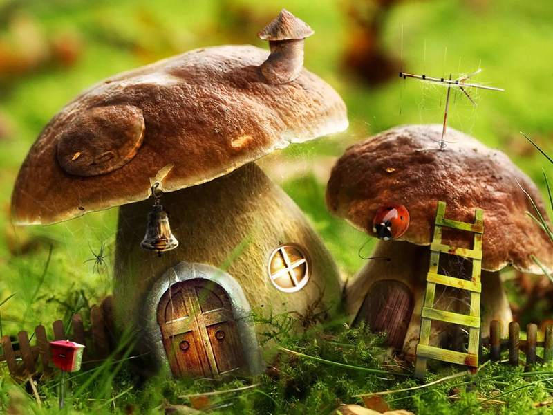 Изучение темы «Грибы» закрепляет знания детей о многообразном мире грибов и развивает художественные способности