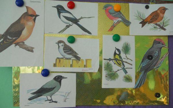 Картинки с птицами
