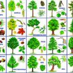 Картинка с деревьями