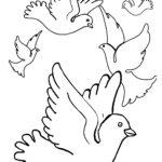 Стая голубей