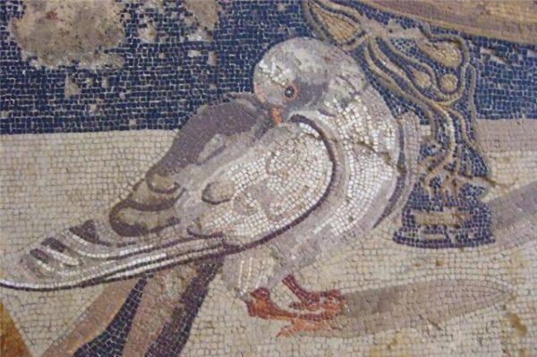 Голубь: античная мозаика