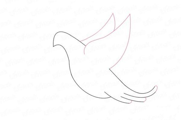 Над спиной голубя появляются два крыла