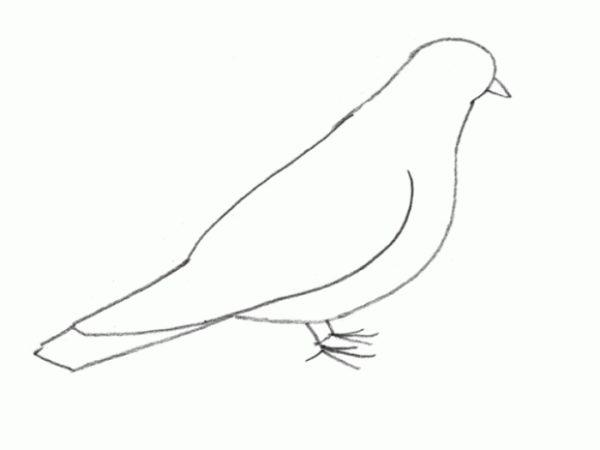 У голубя появляется крыло и пальцы на лапках
