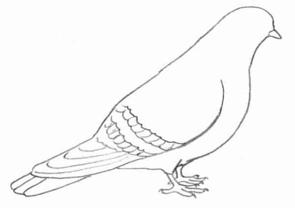 Более детально прорисовываются лапки (когти) и изображаются перья на хвосте