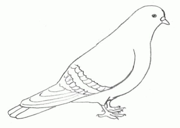 Готовый рисунок сидящего голубя