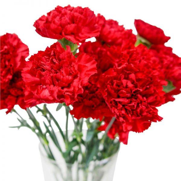 Красные гвоздики в вазе