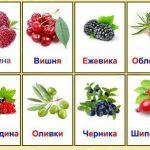 Двенадцать карточек с ягодами