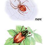 Паук и майский жук