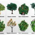 Восемь карточек с кустами и деревьями