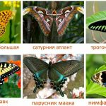 Шесть карточек с бабочками